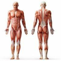Как сахарный диабет влияет на мышцы?